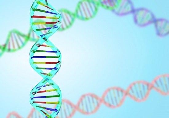 遺伝DNAの画像